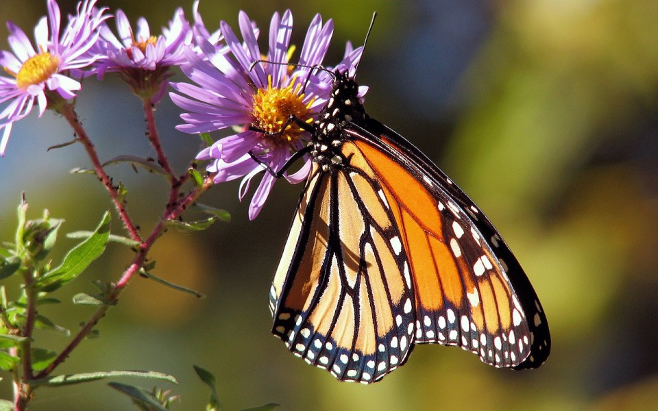 butterfly-17057_1280