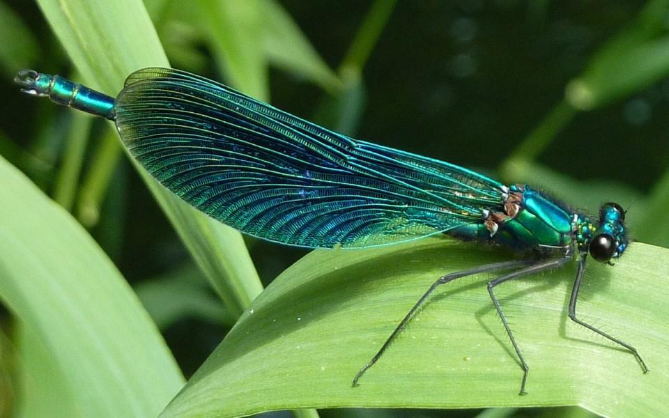 dragonfly-396527_1280