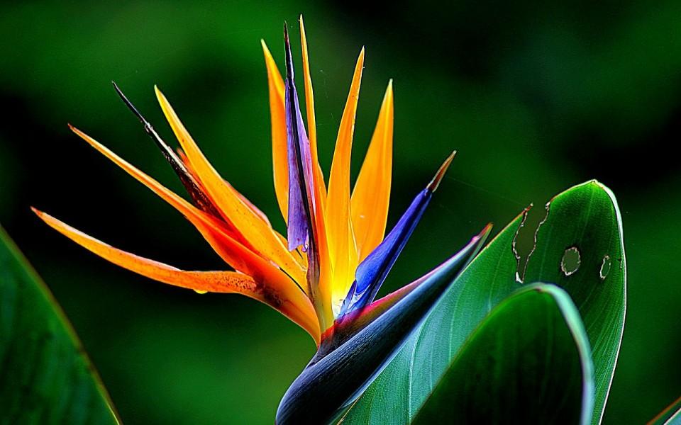 flower-181984_1280